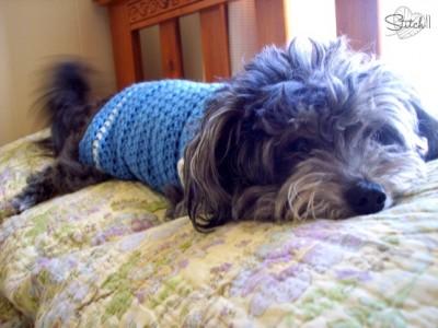 Size Small Dog Sweater, free crochet pattern by Stitch 11. Image (c) Stitch 11.